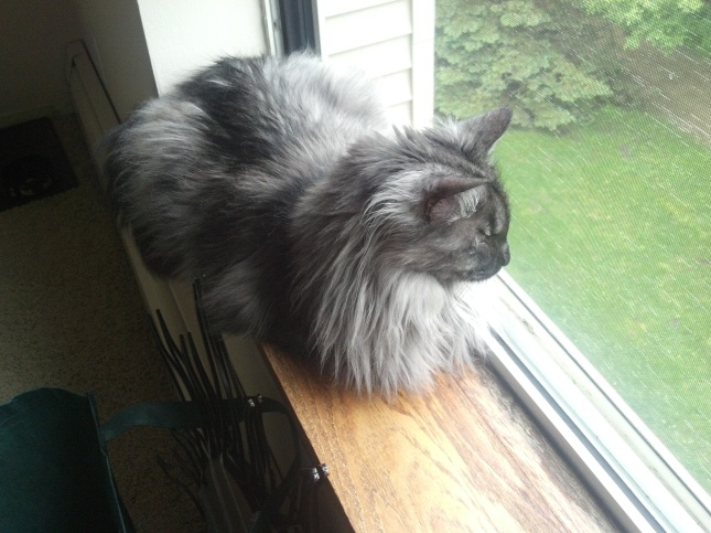 Catpants in the window