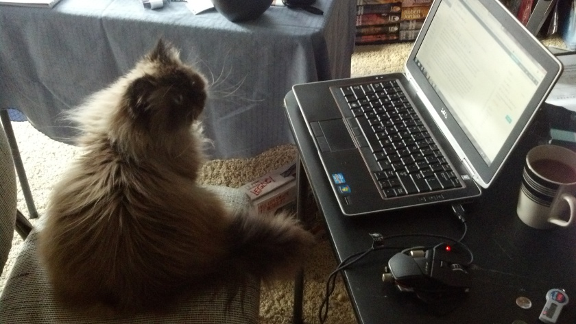 Just kidding, any typos are the result of fluffy fluffy paws on the keyboard.