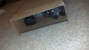 Cat-in-the-box