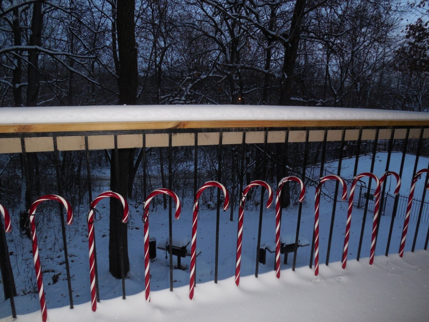 Candycanes in the snow